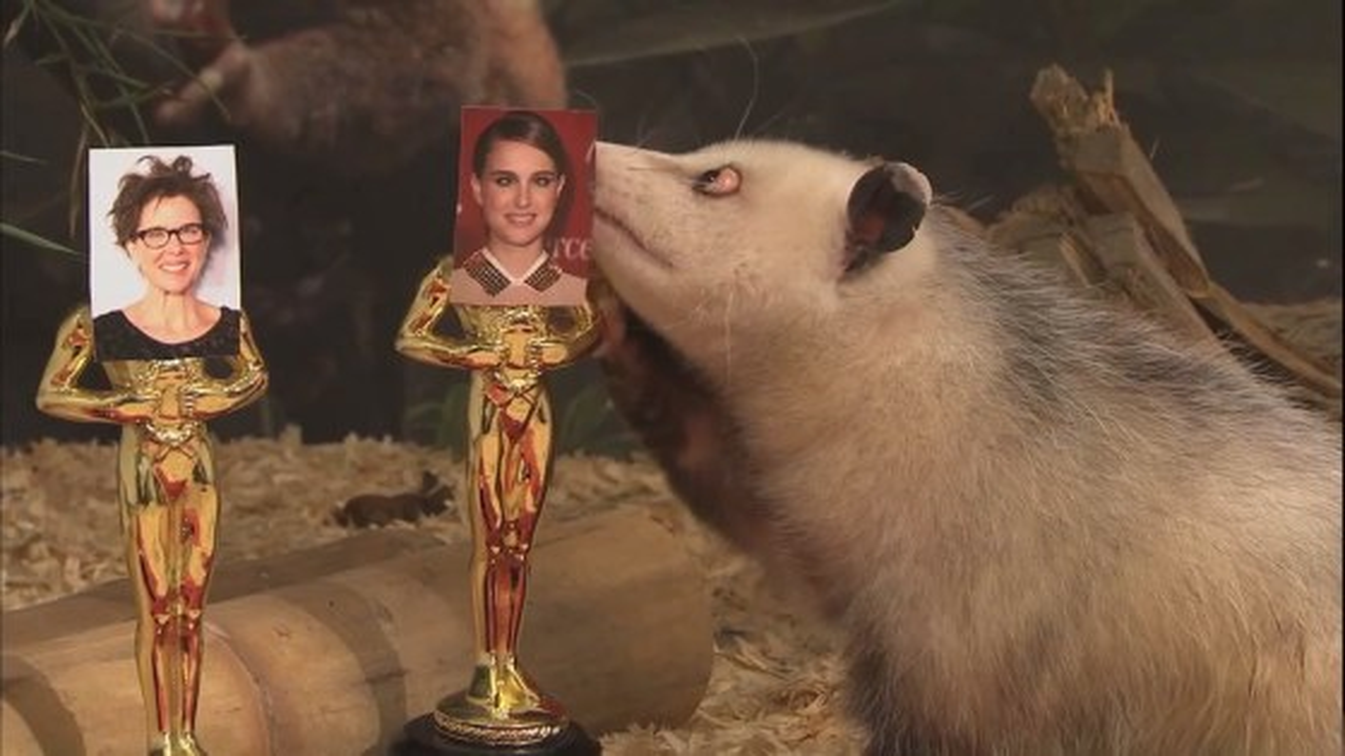 Heidi-Opossum-Oscar1