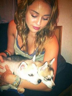 Miley Cyrus Floyd Willow 250x333 Miley Cyrus trägt ihre Hunde am Finger