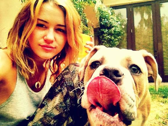 Miley Cyrus Hund Ziggy Miley Cyrus: Erneutes Paparazzi Problem
