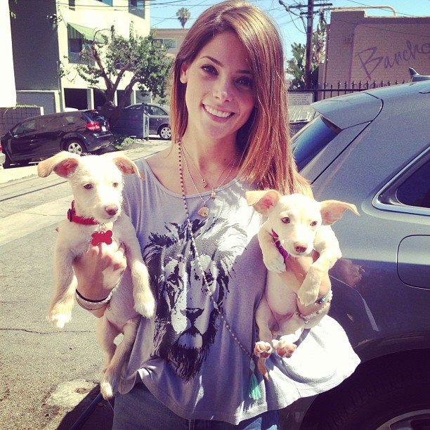 Ashley-Greene-Hunde