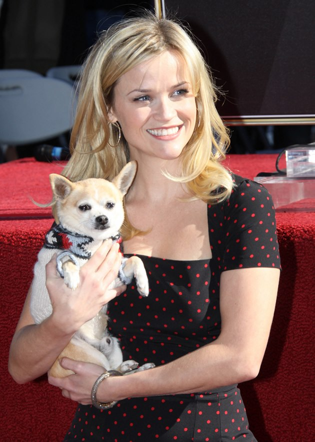 Reese-Witherspoon-Bruiser