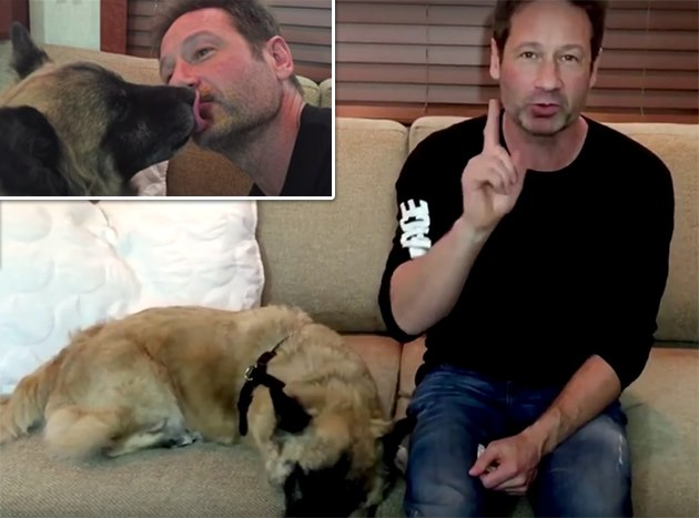 David-Duchovny-LickMyFace-Kampagne